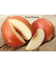 Fruit Peach Snow Beauty
