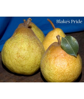Fruit Pear Blake's Pride
