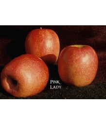 Fruit Apple Pink Lady