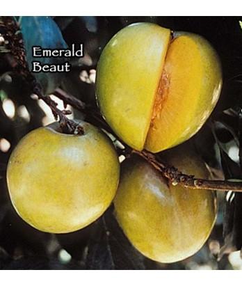 Fruit Plum Emerald Beauty