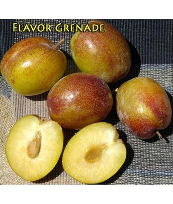 Fruit Pluot Flavor Grenade