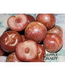 Fruit Pluot Dapple Dandy