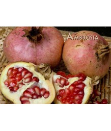 Fruit Pomegranate Ambrosia