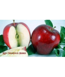 Fruit Apple Red Delicious