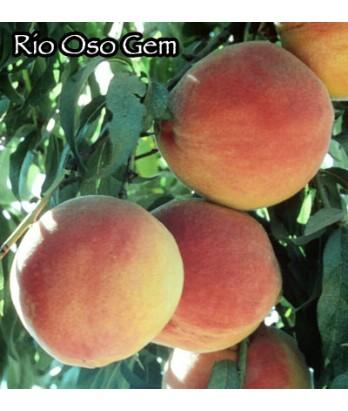 Fruit Peach Rio Oso Gem