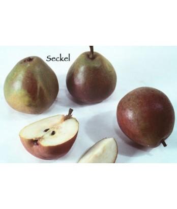 Fruit Pear Seckel