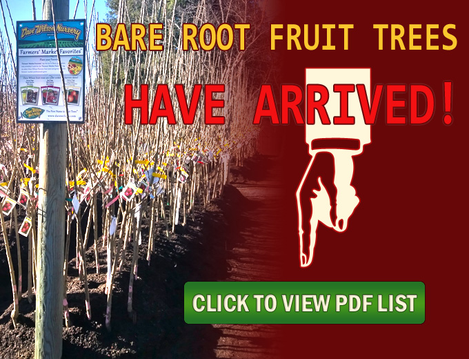 Plants Shrubs Trees In Santa Rosa Urban Tree Farm Nursery