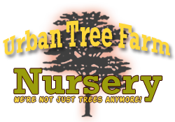 Urban Tree Farm Nursery