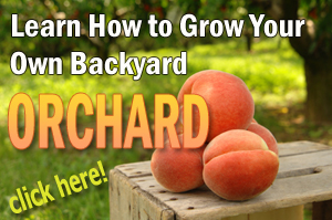 Learn backyard orchard culture.