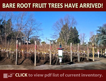 Bare Root Fruit Trees at Urban Tree Farm Nursery in Santa Rosa.