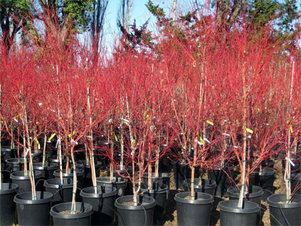 A huge variety of trees at Urban Tree Farm Nursery