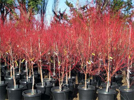 A Huge Variety Of Trees At Urban Tree Farm Nursery