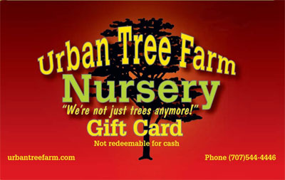 Urban Tree Farm Nursery gift cards!
